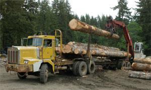 1977 Kenworth C500 off highway log truck
